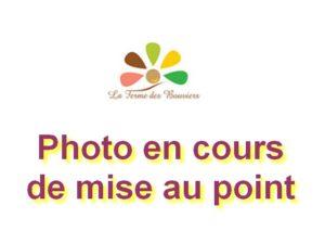 Image indiquant que la photo est en cours de mise au point avec le logo de La Ferme des Bouviers