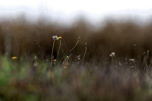 Fleurs Valentine CHAPUIS - La Ferme des Bouviers