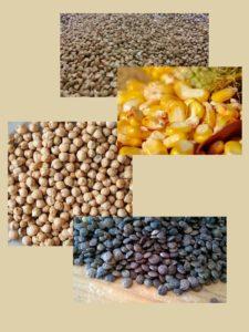 Graines naturellement sans gluten - La Ferme des Bouviers