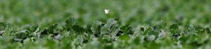 Pollinisateur Ferme des Bouviers - Valentine CHAPUIS